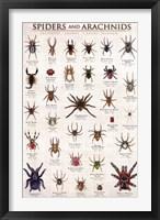 Framed Spiders & Arachnids