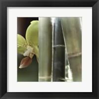 Framed Bamboo III