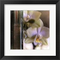 Framed Bamboo IV