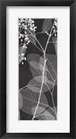 Framed Eucalyptus V