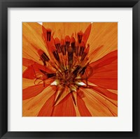 Framed Pressed Flower Abstract #1