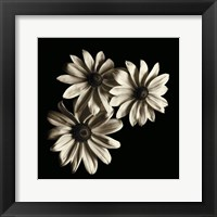 Framed Three Black - Eyed Susans