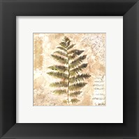 Framed Sokol-hohne - Decorative Fern II