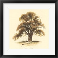 Framed Common Oak