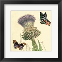 Framed Field Thistle