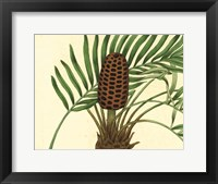 Framed Palmetto III