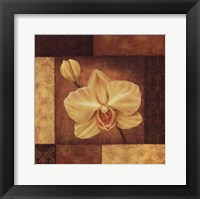 Framed Golden Orchid