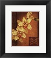Cymbidium Orchid II Framed Print