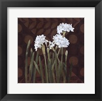 Framed Narcissus on Brown II