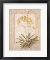 Framed Orchid Fresco IV(L)