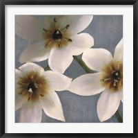 Lily Parfait I Framed Print