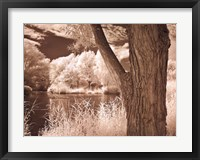 Lakefront View II Framed Print