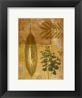 Shades of Gold I Framed Print