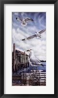 Seagull Key Framed Print