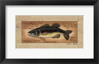 Framed Large Mouth Bass