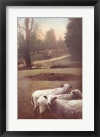 Framed Ruthie's Sheep