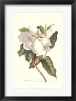 Framed Magnolia Maxime Flore
