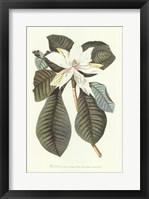 Framed Magnolia Folis Oblongis