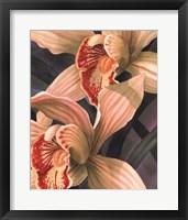 Orchids II Framed Print