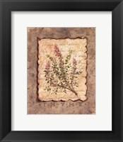 Vintage Herbs - Thyme Framed Print