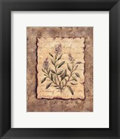 Framed Vintage Herbs-Sage