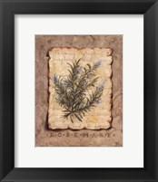 Vintage Herbs - Rosemary Framed Print