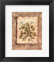 Framed Vintage Herbs - Parsley