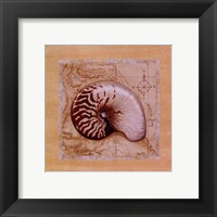 Sea Treasures II Framed Print