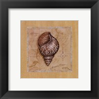 Sea Treasures IV Framed Print