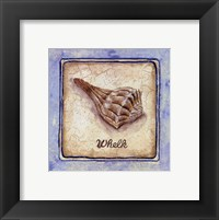 Whelk Framed Print