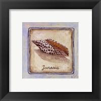 Framed Junania