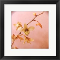 Pink Sugar Framed Print