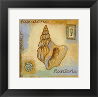 Framed Fascidaria Hunteria
