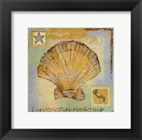 Framed Lyropecten Nodosus