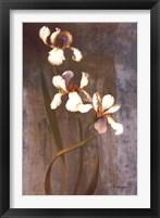 Iris Rhythms Framed Print