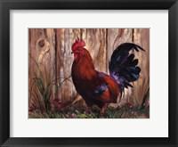 Framed Bantie Rooster