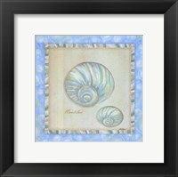 Bubble Bath Shells I Framed Print