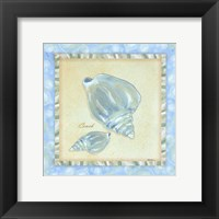 Framed Bubble Bath Shells III