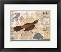 Bird Brained II Framed Print