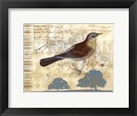 Bird Brained III Framed Print