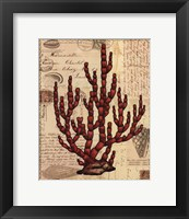 Red Coral III Framed Print