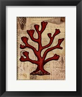 Red Coral IV Framed Print