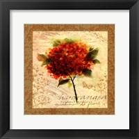 Framed Hydrangea I