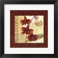 Framed Red Orchid Square I