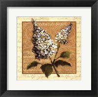 Framed White Lilac Square