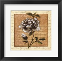 Framed White Rose Square