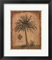 Caribbean Palm III With Bamboo Border Framed Print