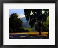 Framed Eucalyptus Sunset