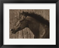 Bayhorse Framed Print