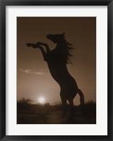 Framed Rearing Horse Silhouette
